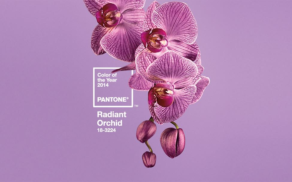 Pantone Radiant Orchid 18-3224